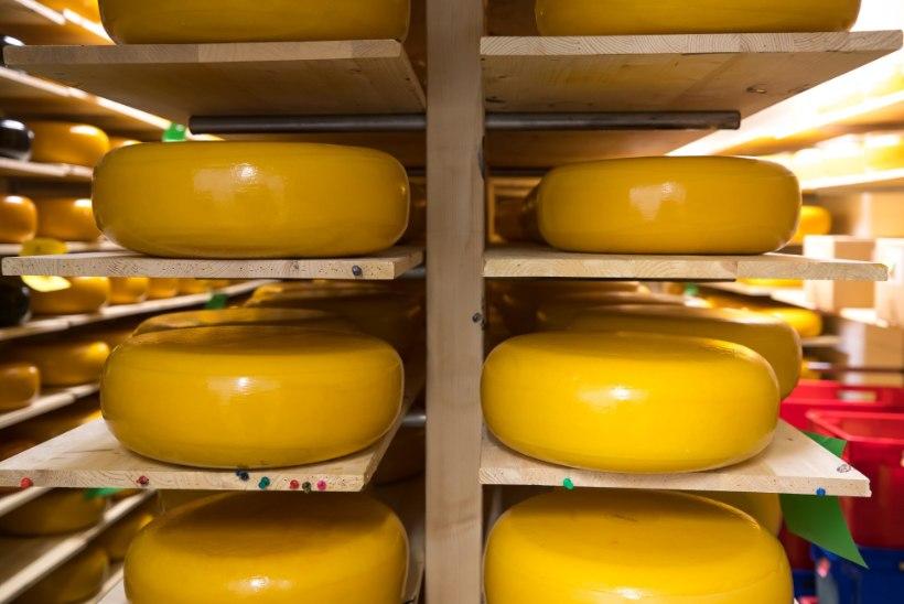 LIBA-PARMESAN: itaallased kurdavad, et õige juustuga konkureerivad võltsingud, teiste seas Nõo Lihavürsti snäkid