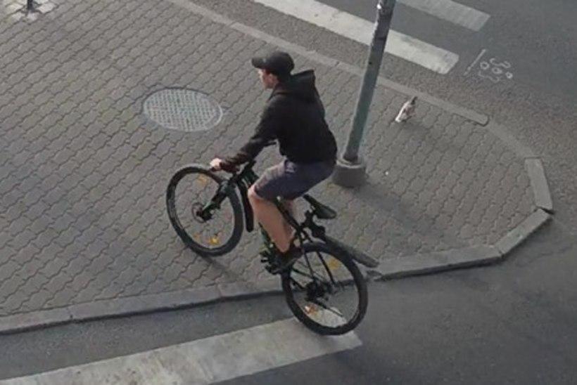 Politsei otsib pealtnägijat: kes sõitis rattaga otsa 6aastasele lapsele?