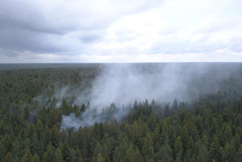 FOTOD | Päästjad kustutavad Paide läheduses metsapõlengut