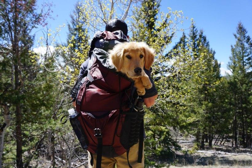 Koeraga matkama! 4 kasulikku nõuannet, et kõik kulgeks plaanipäraselt