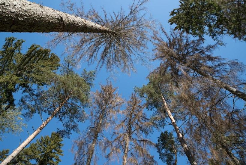 HOIAME METSA: Eestis istutati eelmisel aastal rekordiliselt palju puid