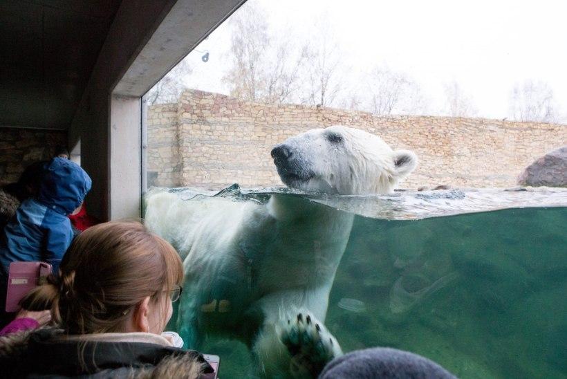 Tallinna loomaaed süüdistab Eesti Ekspressi nende halvustamises