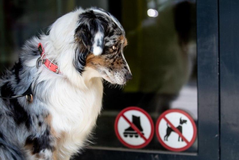 KAHTLUS: koeri surmav haigus on Norrast jõudnud Lätti?