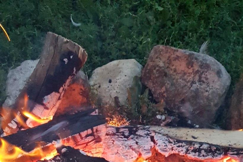 Mudakala koger kivigrilli maiuspa  laks