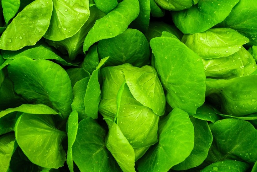 NÄDALA NIPP | Kuidas salatilehed külmkapis kauem värsked püsiks?