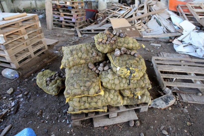 Mädanenud kartulid tapsid Venemaal kolm inimest