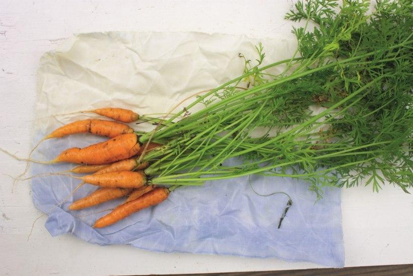 Mis imeasi on vahakangas ja kuidas see toidu värskena hoiab?