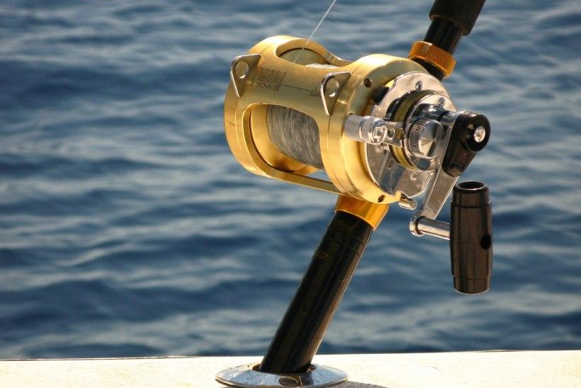 Tulnukas meresügavustest: Norra kalamees tabas haruldase vee-elaniku