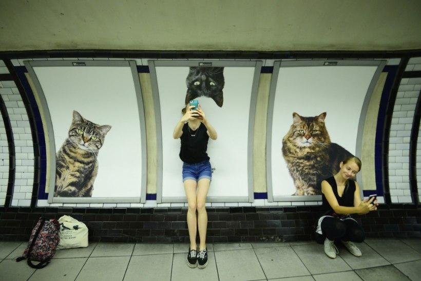 VAHVA ETTEVÕTMINE: Londoni metroojaama reklaamid asendati kassiplakatitega