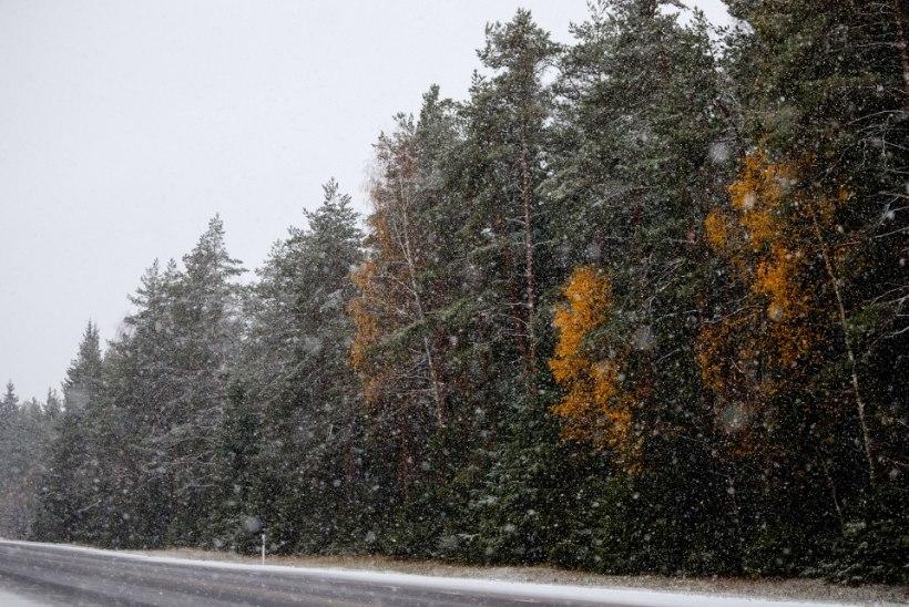 ILMAPROGNOOS   JOPED KAPIST VÄLJA! Nädala teises pooles võib sadada esimesi lumeräitsakaid