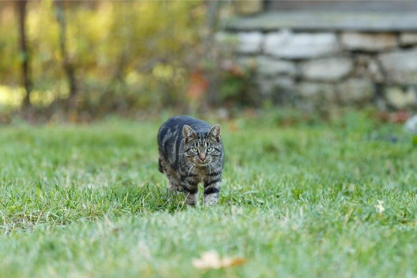 Eestlaste biolagunevad lemmikloomatooted vallutavad maailma