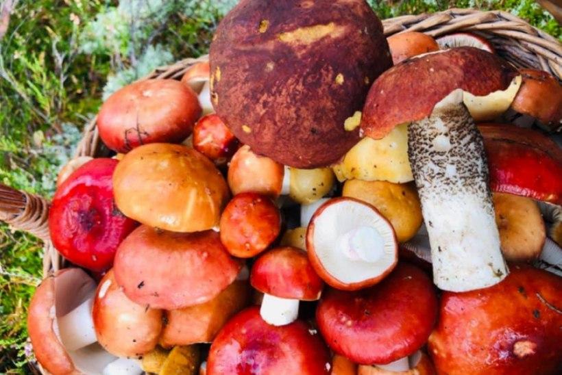 EVELIN ILVESE KOKAKOOL: ühepajatoit seentega