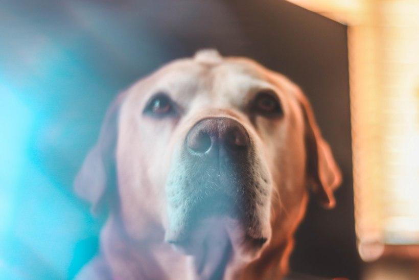 LUGEJA KÜSIB | Kuidas peaksin käituma, kui mu sõbra lemmikloom sureb?