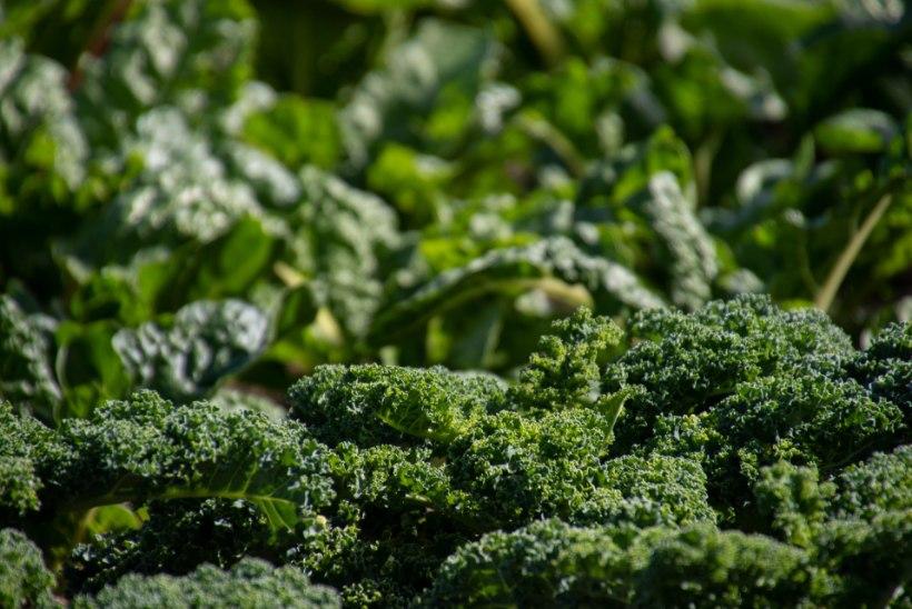 AED | Pane sügisel seemned mulda ja naudi kevadel varajast supersaaki!