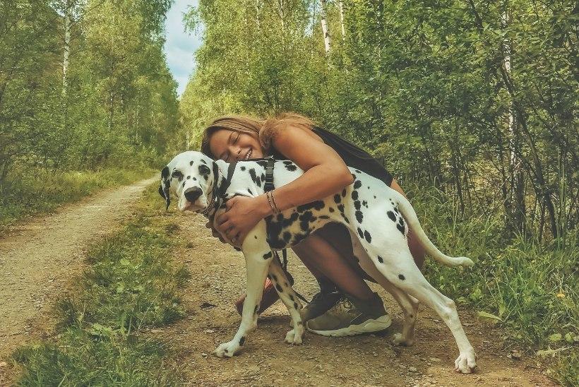 Eestis tegutsevad koerahoidjad, kes hoiavad lemmikut sama hoolega kui last
