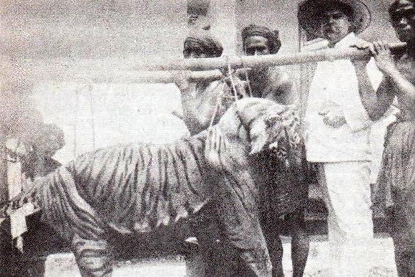 MINEVIKUHETK | 27. september: jahimees tappis maailma viimase Bali tiigri