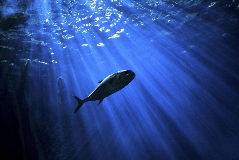ÜRO raport: kliimakriis ohustab kalade tulevikku