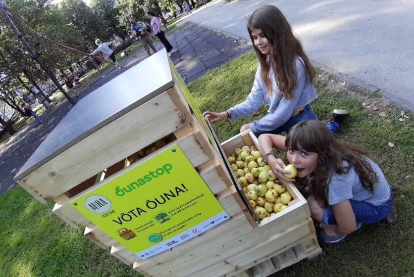 Õunastop alustas: õunu soovitakse enam, kui suudetakse pakkuda
