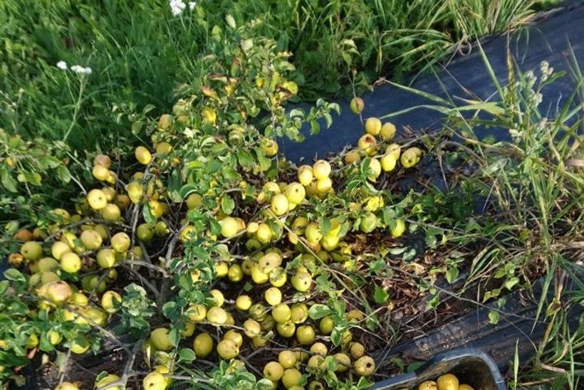 AIAELU | Rohenäpud jagavad põnevaid loodusevigureid