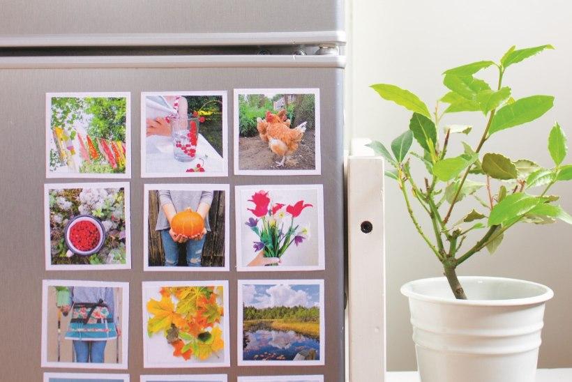 VANAVANEMATE PÄEV | Vahva üllatus valmib 15 minutiga: külmkapi-Instagram