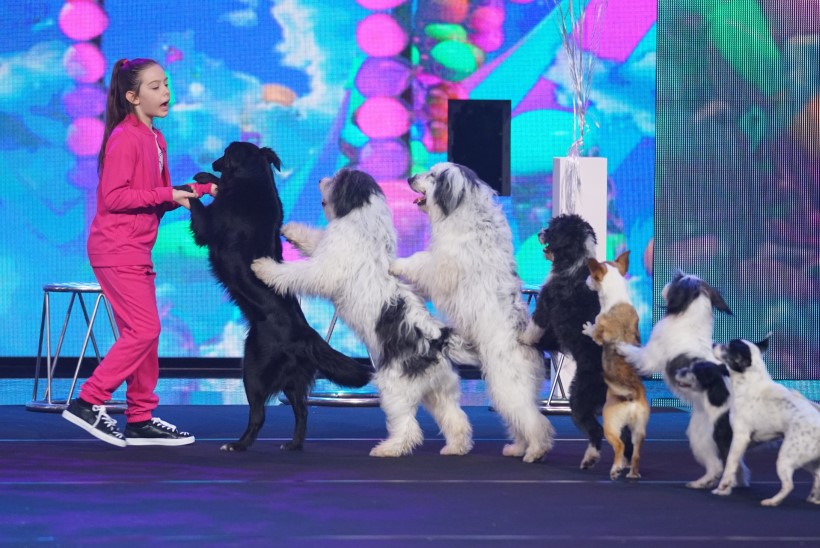 VIDEO | Lapsdresseerija pani korraga kaheksa (!) koera tagakäppadel tantsima