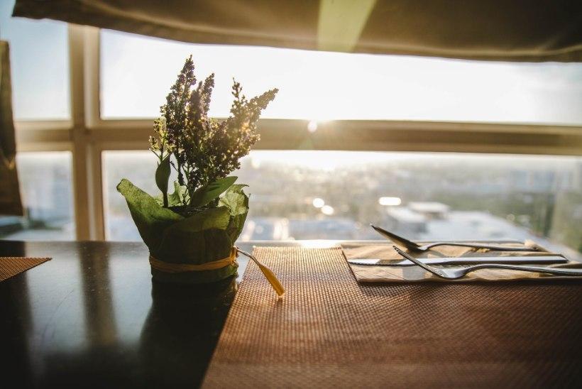 AVESTA | Kolmapäev, 11. september: kui sulle kingitakse potilill, siis on oodata õnne ja rõõmu