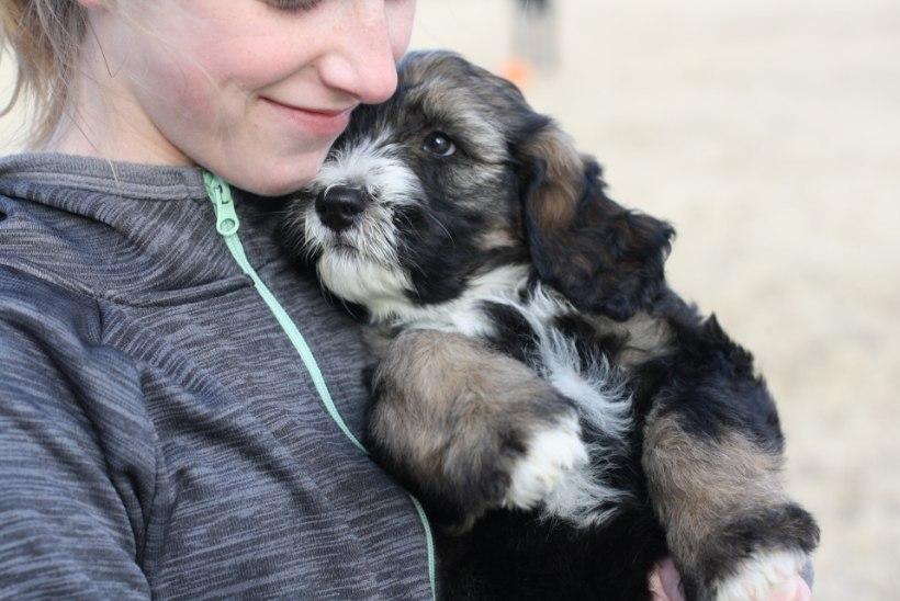 3 eluks vajalikku hoiakut, mida õppida koeralt