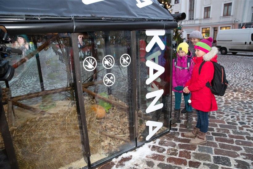 Tartu jõululinna puhaskasu: 120 kanamuna