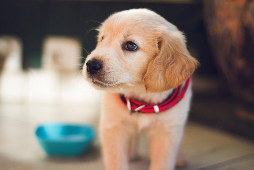 Jurist soovitab: lemmiklooma ostes sõlmi alati leping!
