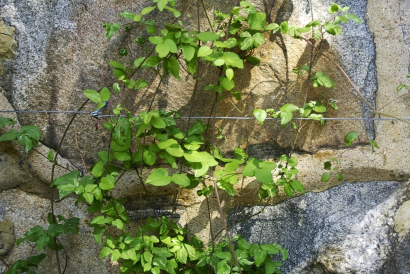 Rohelised ja õitsvad müürid