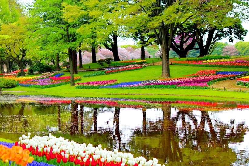 Aiahuvilise reisikalender: kus ootab lilleilu kevadel ja kus suvel?