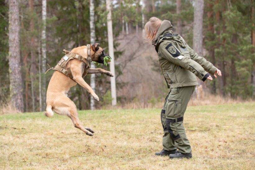 JAANUAR PILDIS | Austraalia suurpõlengud, Rainer Vakra võidurõõm, koer päästis vanaproua elu