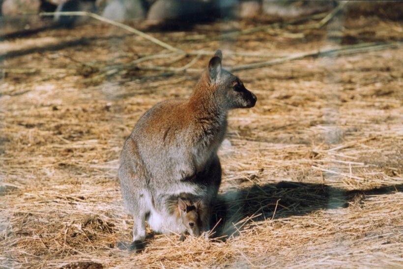 ARMAS TOETUS: vanaproua näpistas pensionist kümme eurot Austraalia loomade aitamiseks