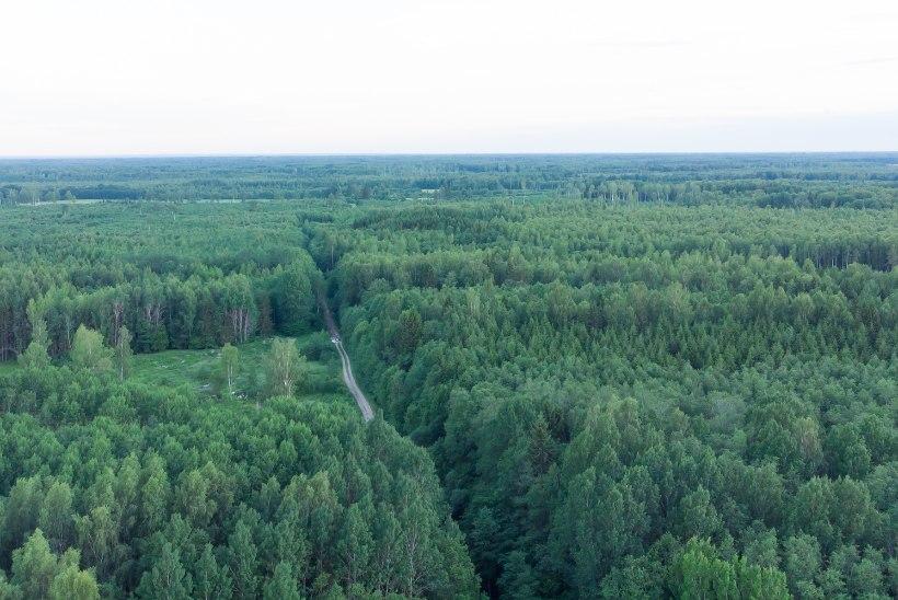 Peeter Ernits: alanud kolmanda metsasõja saab lõpetada