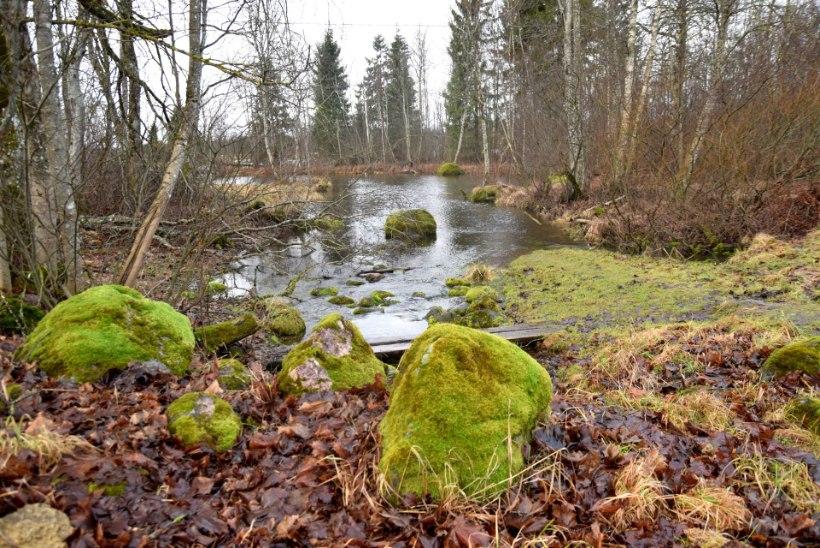Pruunid sildid | Kust algab Pärnu jõgi?