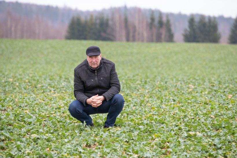 SOE TALV: kasvada mühavad nii raps kui rukis ja metsa saab seenele minna!