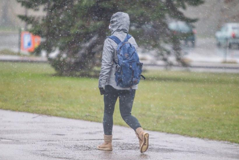 JÄLLE SAJAB! Selle skeemi abil saad selgeks, mida ukselävel tegema peaksid, kui parasjagu vihma kallab!