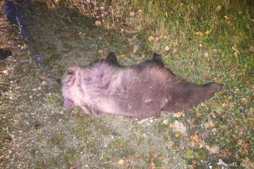 Karud surnuks sõitnud juht põgenes sündmuskohalt
