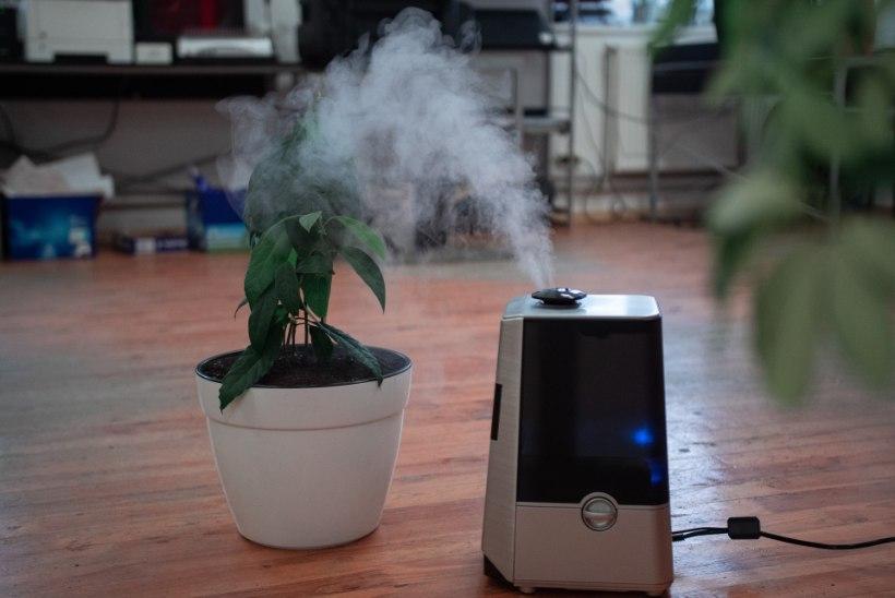 Kas sinu kodus on liiga kuiv õhk? Ekspert selgitab, milline ruum vajab täiendavat niisutamist