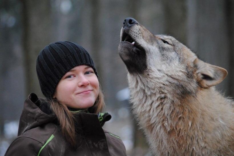 """Hunditundja Laura Kiiroja: """"Meie metsadesse oleks vaja rohkem hunte."""""""