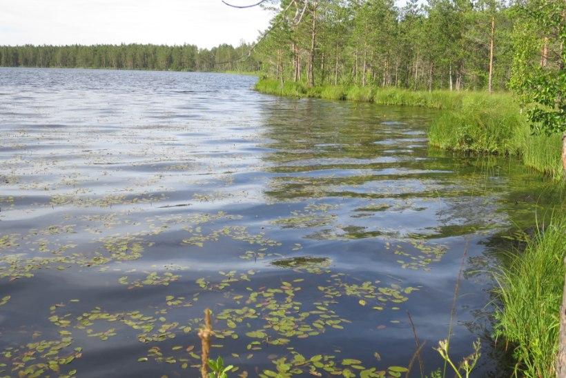 Kalakoht | Soojärvede erinevad palged: Parika, Ohepalu ja Imatu järved