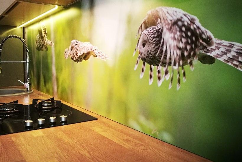 KOGEMUSLUGU | Kasutasime köögiseinal loodusfotot, mis on justkui aknaks metsa