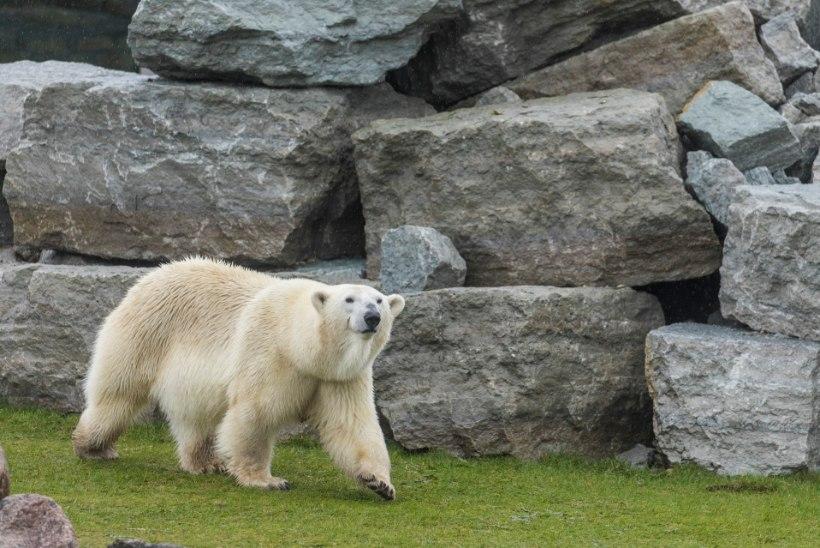 LOOMAD VARASTATI PALJAKS? Prokuratuur kahtlustab Tallinna Loomaaia Sõprade Seltsi juhte suure summa omastamises