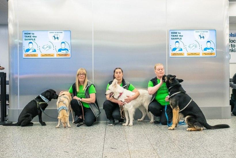 KANGELASED! Tunnustati koeri, kes aitavad avastada koroonaviirusesse nakatunud inimesi