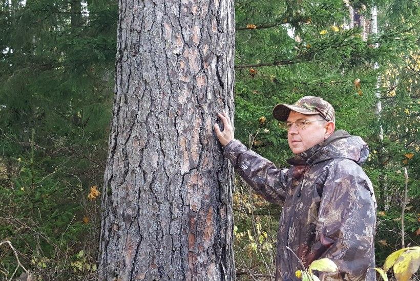 Looduskaitse varjukülg: metsaomanikest said vastu tahtmist kaitseala pidajad
