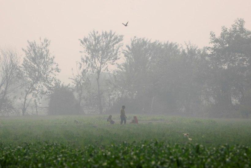 Sajad miljonid indialased ärkasid peale suurpidustusi eriti mürgise sudu käes