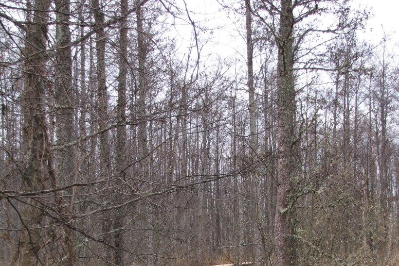 Külasta Elistvere loomaparki sügistalvisel ajal – sind ootavad karu, ilves, hunt ja palju teisi loomi!