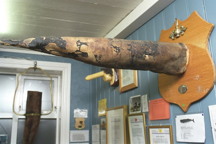 PEKK JA PEENIS: pilk Euroopa sõgedamatesse muuseumidesse
