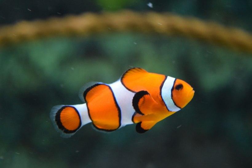 Uimed võivad olla sama tundlikud kui sõrmeotsad