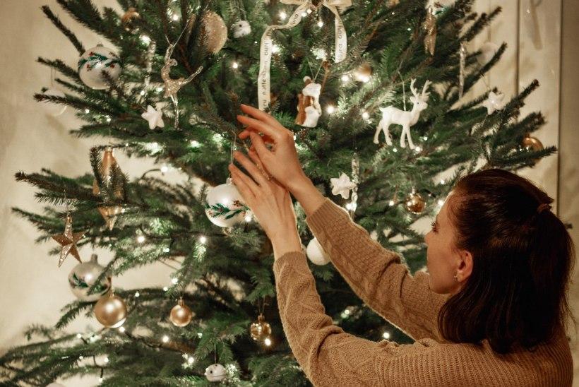TEST | Vaata järele, milline kuusk sobib jõuludeks sinu koju!